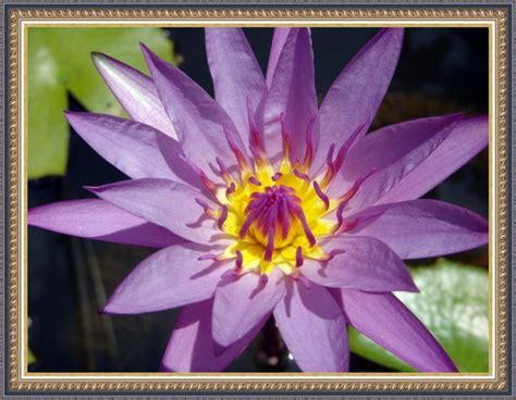 desain gambar flora 02 flora fauna si jangkung komputer grafis semarang