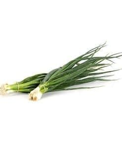 Jual Bibit Sawi Pagoda jual benih bibit tanaman sayuran murah lengkap bibit