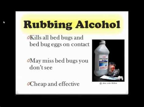 do rubbing alcohol kill bed bugs how to get rid of bed bugs funnycat tv