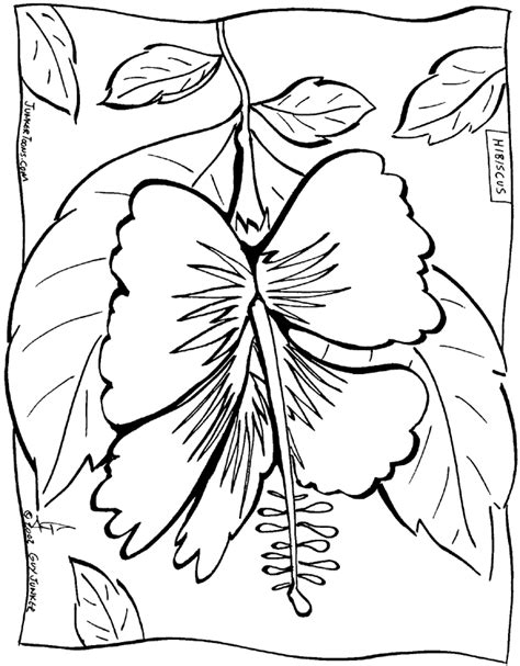 hawaiian coloring pages hawaiian flower coloring pages coloring home