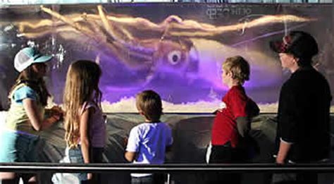 underwatertimescom aussie aquarium featuring monster squid frozen  permachill