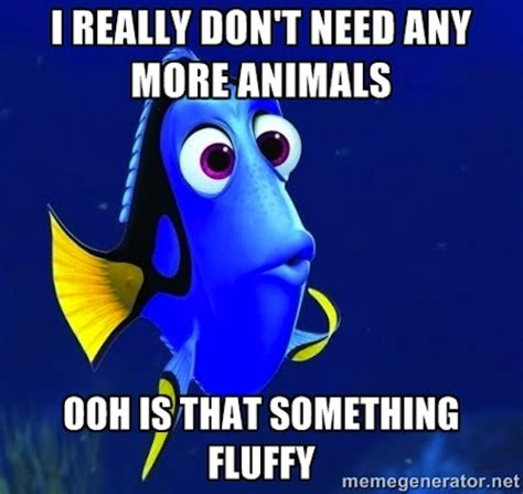 Very Funny Meme Pictures - really funny memes forgetful dory ruin my week
