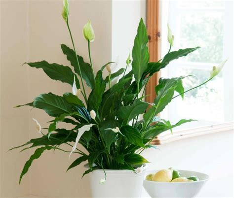 10 low light low maintenance plants for office desk low maintenance office plants home design