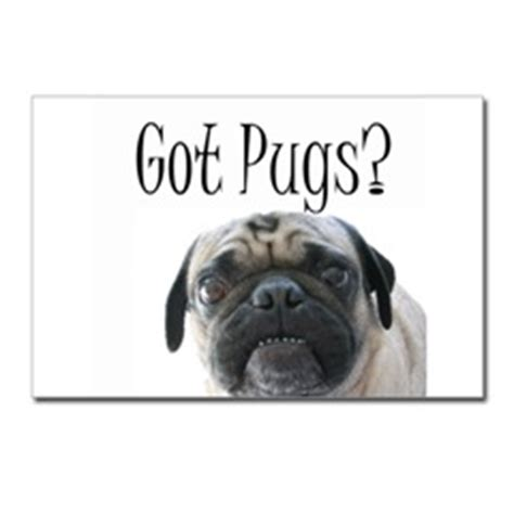 study pug cost pugs dogbreed gifts pug greeting cards notecards