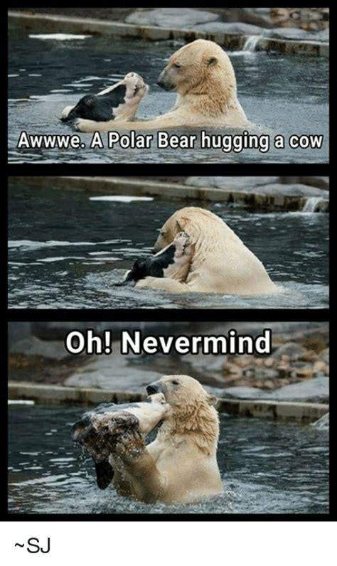 Polar Bear Meme - awwwe a polar bear hugging a cow oh nevermind sj bear meme on me me