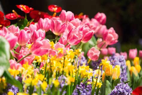 Chicago Flower And Garden Show Kicks Off Spring In Chicago Flower And Garden Show Chicago