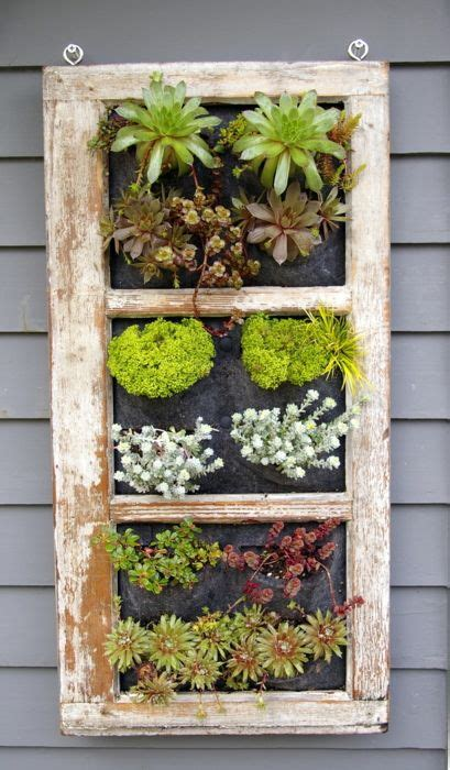 Vertical Window Garden Beautiful Variety Of Succulents Are Included In The