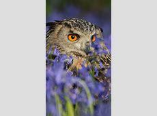 Wallpaper Owl, HD, 5K, Animals, #3838 Ipad Wallpaper 768x1024