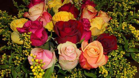 Tanaman Mawar Floribunda Kuning 1 gambar menanam daun bunga warna warni kuning flora