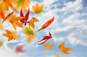 Image result for pictures of autumn l;eaves for eyfs