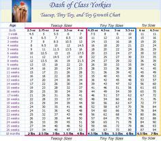 dash of class yorkies yorkie puppy weight chart yorkie growth chart weight chart terrier weight