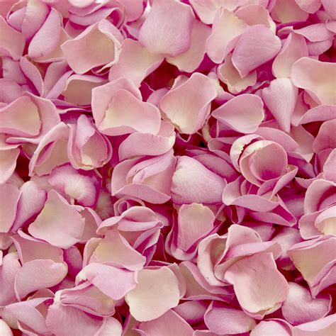 rose petals on bed romantic bed romance in bed petals roses