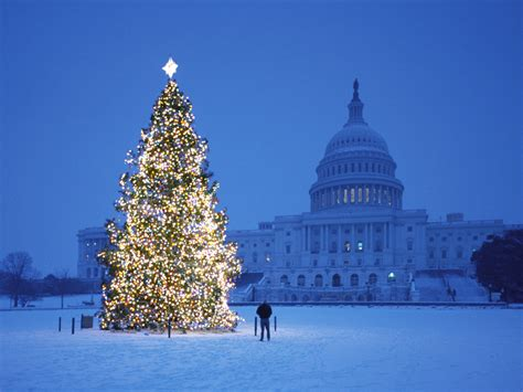 christmas trees dc mood in a white house luxurious photos from washington