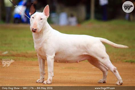 dogs india siberian husky dogs india upcomingcarshq