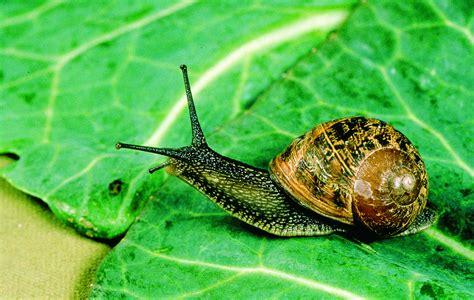snail  slug control agriculture  food