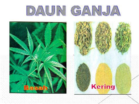 download wallpaper daun ganja antagonist placeholder