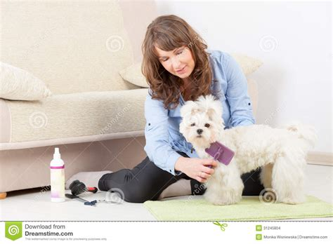 grooming at home grooming at home stock images image 31245804