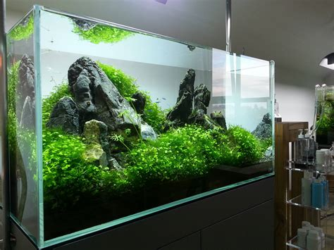 aquascaping ada aquascape by ada polska pin by aqua poolkoh aquascape