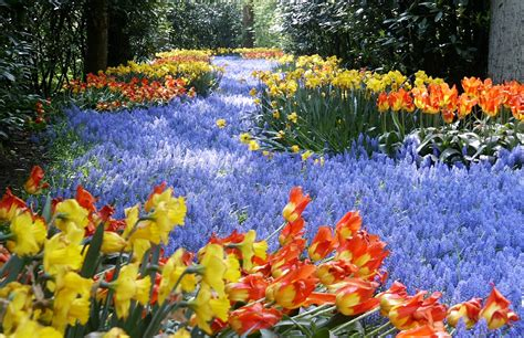 The Keukenhof World S Largest Flower Garden Travel Flower Garden In The World