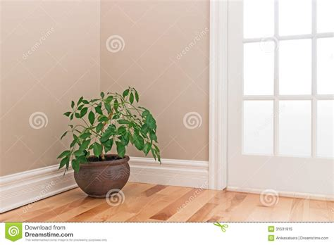 Corner Of Room by Green Plant Decorating A Room Corner Stock Image Image