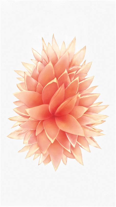 iphone 6s rose gold wallpaper rose gold iphone wallpaper 79 images