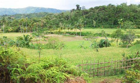pemandangan desa foto dunia alam semesta indonesia