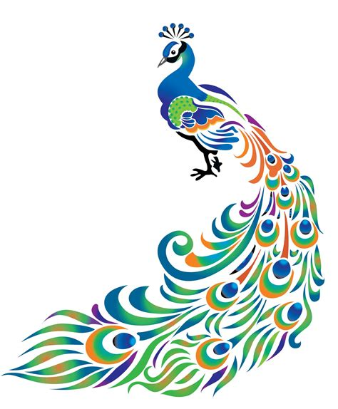 design art networks peacock clipart simple pencil and in color peacock