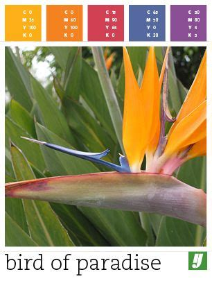 color of paradise color palette bird of paradise colorpedia