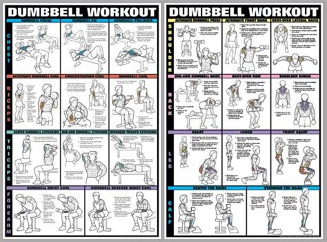 dumbbell exercises for biceps chart recherche