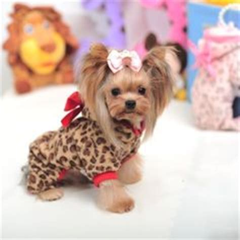 yorkie clothes and accessories yorkie clothes clothing accessories and more breeds picture
