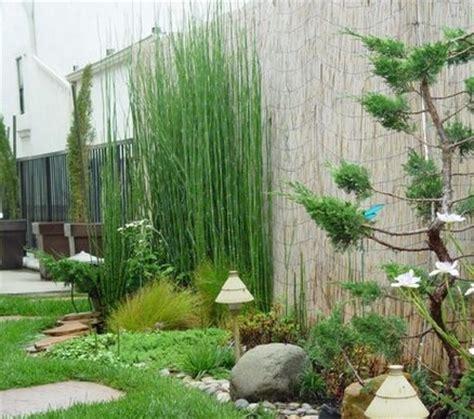 Harga Creepers Indonesia tanaman bambu hias di indonesia bibitbunga