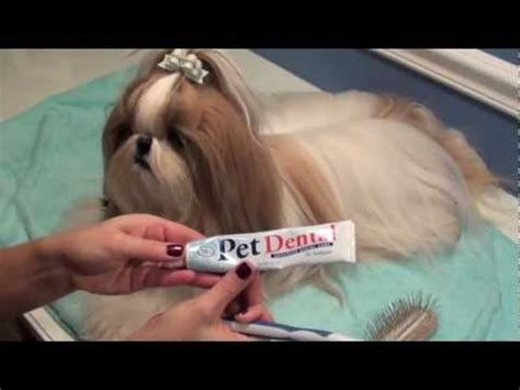 shih tzu grooming pillow grooming pillow funnydog tv