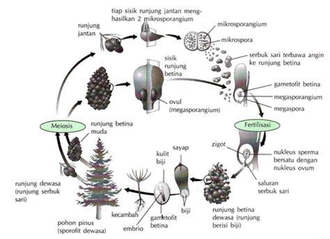 Benih Kacang Panjang Lumut polinasi persarian dan fertilisasi materi dan soal ipa