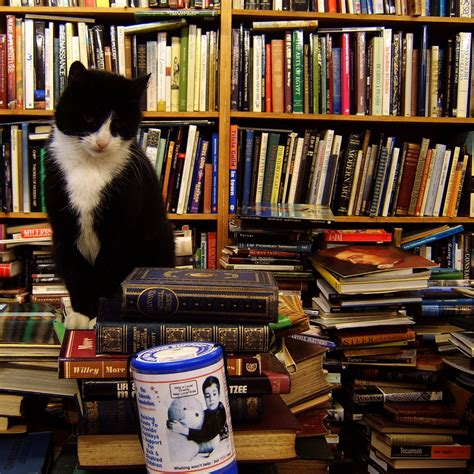 Cat And Books um today 5 books you want to be on top of this year