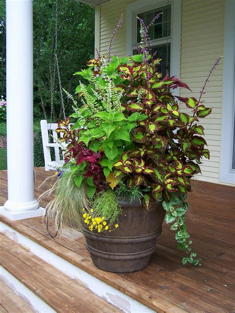 Container Gardens On Pinterest Container Gardening Garden Container Ideas