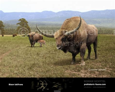 American Giant Gift Card - bison latifrons giant north american bison