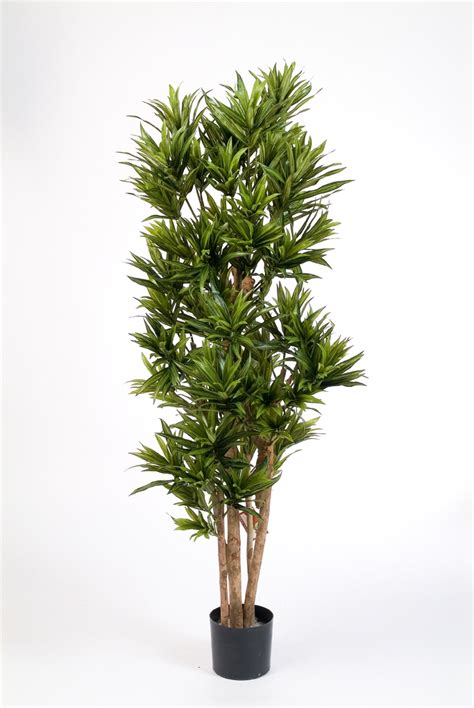 dracaena reflexa dracaena reflexa 120 cm kunstpflanze de