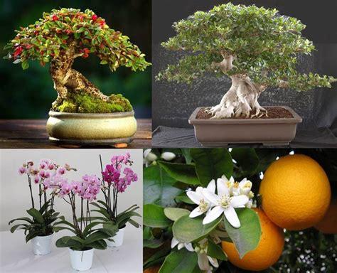 fiori da regalare alla fidanzata come scegliere una pianta da regalare