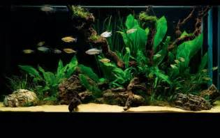 how to set up a simple but stunning planted tank
