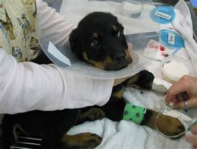 treatment for parvo in dogs