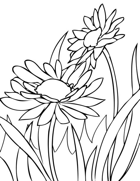 watercolor coloring pages draw daisies print this page spring flowers coloring