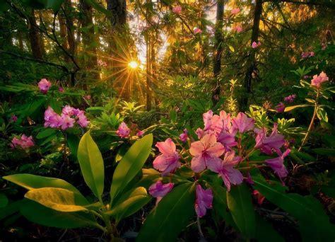 imagenes bonitas de paisajes con flores banco de im 193 genes fotos de paisajes y flores 11 im 225 genes