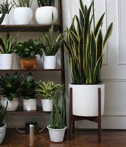 House Plant Pots Best 25 White Planters Ideas On Indoor Cactus