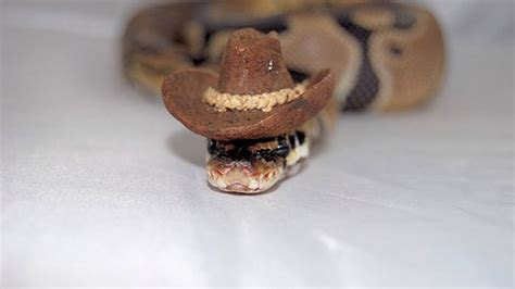 Scared Of Snakes? Put A Hat On It!   Bored Panda