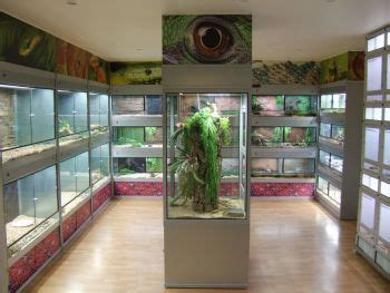 how to remove lizard from room best 20 reptile room ideas on snake terrarium iguana cage and reptile terrarium
