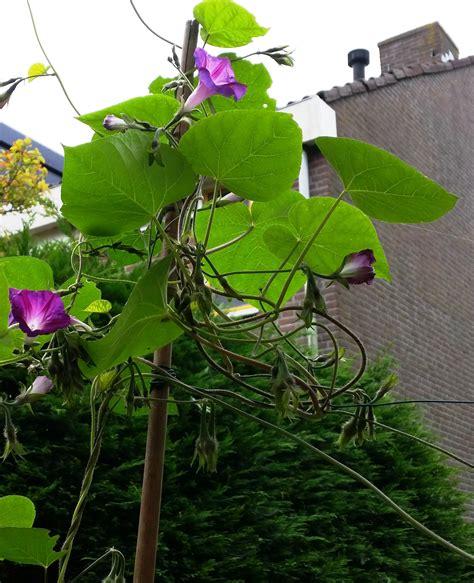 tuin september september tuin