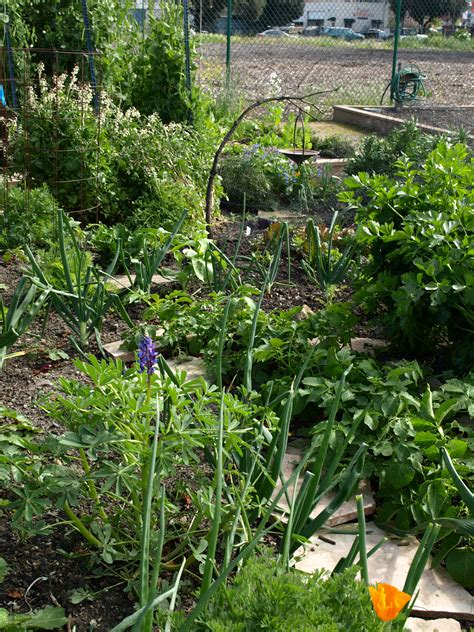 sustainable vegetable gardening sustainable vegetable gardening series bay nature