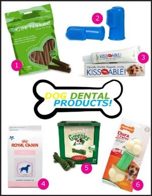 quotes about dental care quotesgram dental care for dogs quotes quotesgram