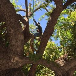 Anthony California Ls by Anthony S Tree Service 14 Photos 10 Reviews Tree