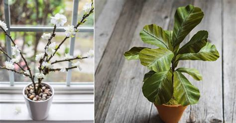 easy diy fake plants projects    fake plants